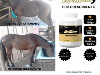 Suplementos pra cavalos
