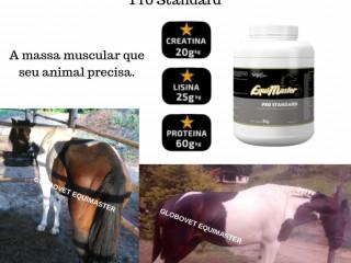 Suplementos para cavalos