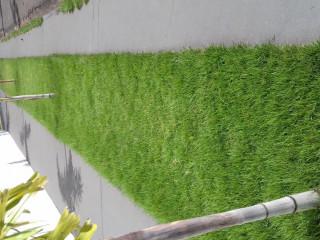 grama esmeralda em Maringá e regiÃo