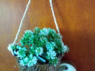 Preguiça cachepô de pendurar flor ilustrativa