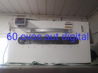 Chocadeira 40 ovos automática digital